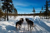 Tundra Transport