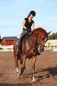 Brunette Woman Riding Trotting Chestnut Horse