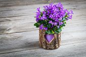 Blue Campanula Flowers