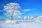 Rural Winter Landscape With A One Tree And The Blue Sky