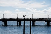 Sillouette Of Pelican And Pier