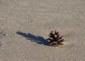 Pinecone On Sand