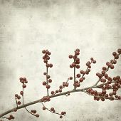 image of winterberry  - textured old paper background with branches of winterberry - JPG