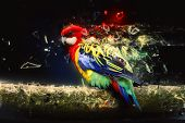 stock photo of canvas  - Parrot on the branch - JPG