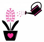 Hyacinth And Watering Can