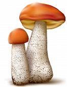 Leccinum Mushrooms