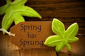 Brown Organic Label With English Text Spring Has Sprung