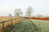 Frosty country morning