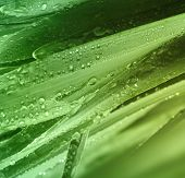 Grass with water drops background.