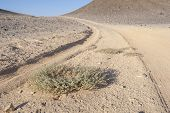 Vehicle Tracks Through An Arid Desert