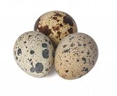 Group Of Quail Eggs
