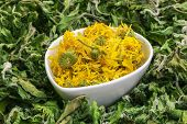 Dry calendula in bowl with green dry herbs around