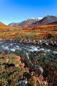 Mountain River Taiga