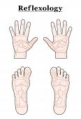 Foot Hand Reflexology Outline