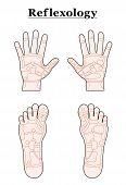 Foot Hand Reflexology Outline