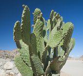Cactus Growing In Remote Desert
