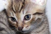 Neweborn Kittens