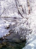 WinterWhite3