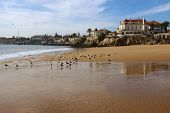 Seagulls in the beach of the beautiful village of Cascais in Portugal