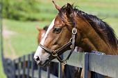 Pferderanch