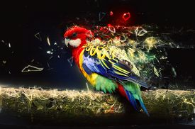 pic of colorful banner  - Parrot on the branch - JPG