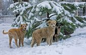 stock photo of stray dog  - Stray dogs in the snow under the tree - JPG