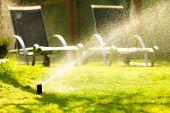 picture of lawn grass  - Gardening - JPG