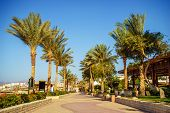 stock photo of sea-scape  - Palm trees and footway in tropical garden on Red sea coast - JPG
