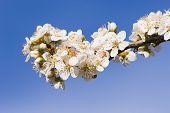 Frühjahr blühen 01