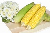 pic of sweet-corn  - Yellow sweet corn with white flower background - JPG