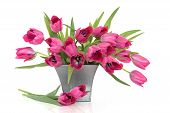 image of flower arrangement  - Pink tulip flowers in a distressed pewter pot and scattered   over white background - JPG