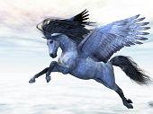 Pegasus plata