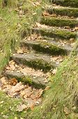Mossy Staircase with Fallen Maple Leaves