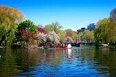 Swan Boat In Boston Public Garden
