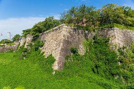 picture of algae  - Turret of the osaka castle with alga - JPG