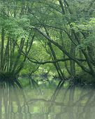 Green Trees Water
