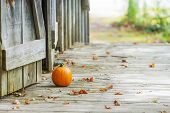 Small Pumpkin Sitting On Wooden Deck Outside Rustic Barn Doors, Autumn Leaves On Ground poster