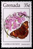Grenada - Circa 1996: A 35-cent Stamp Printed In Grenada Shows The Caribbean Buckeye Butterfly, Juno