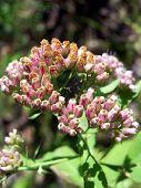 Wildflower Details