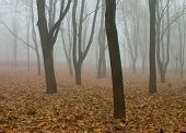 Fog In The Autumn Forest