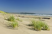 pic of pacific rim  - Sand dunes on Long Beach in Pacific Rim National park Canada - JPG