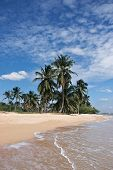 View Of Nice Tropical Sandy Beach With Palm Trees