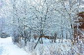 Winters Tale, Lovely Winter Scenery, Winter Park in Snow, Whitened Spruce Branch with a Snowy Fores poster
