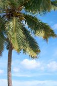 Palm Tree In Front Of Blue Sky