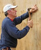 Carpenter nailing plywood sheathing into place