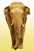 The Elephant Going Towards