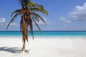 Tulum Beach With Coconut Palm