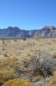 foto of semi-arid  - typical Arizona landscape with mountains and prairie - JPG