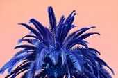 Surreal Style Pop Art Of Vivid Blue Palm Tree On Pink Background poster