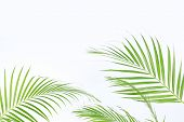 Green Palm Leaves (dypsis Lutescens) Or Golden Cane Palm, Areca Palm Leaves, Coconut Leaves Or Tropi poster